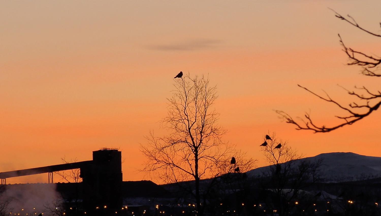 Fågel mot röd himmel